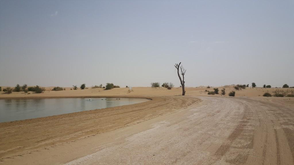 Al Qudra lakes, konstgjorda sjöar där hundratals fåglar håller till