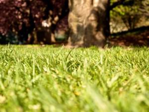 grass-1205263-1280x960
