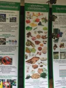 kompostinfo