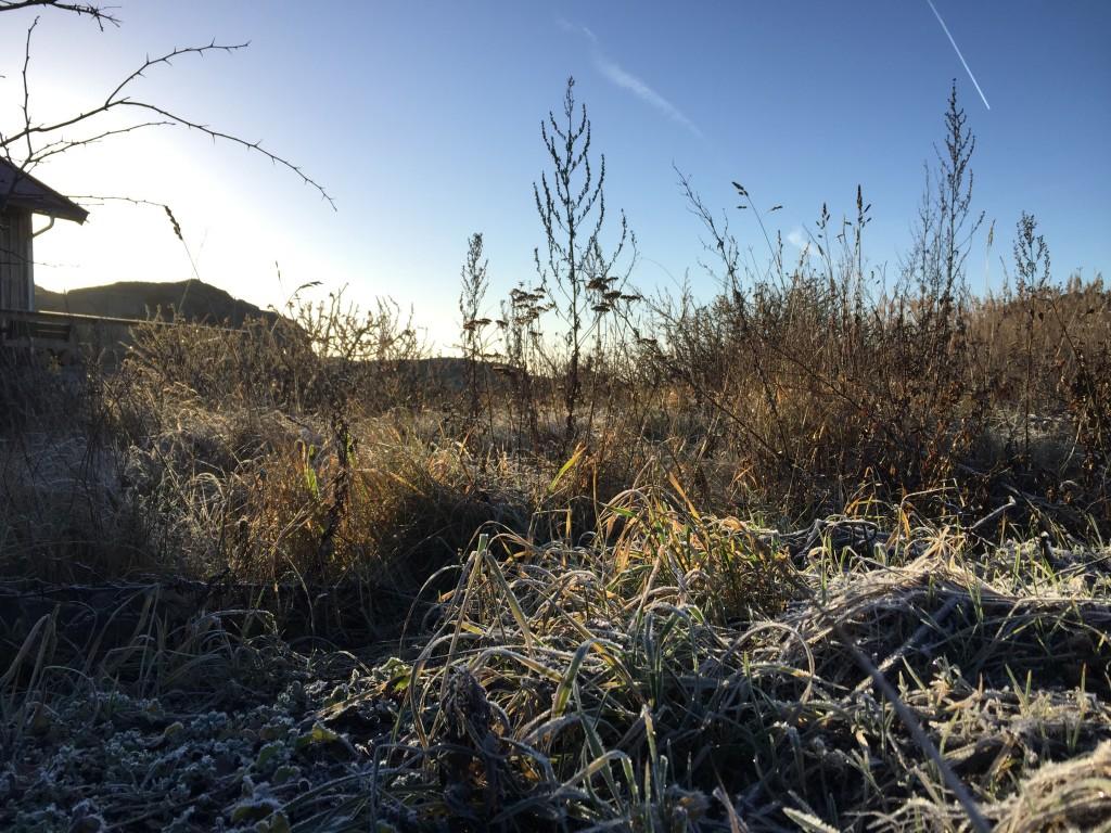 Vinter på Tjörn Foto Carina Etander Rimborg