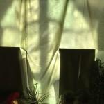 I Getsemanes trädgård