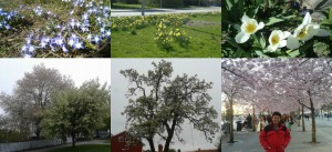 5 Colors of Spring for Blog 11
