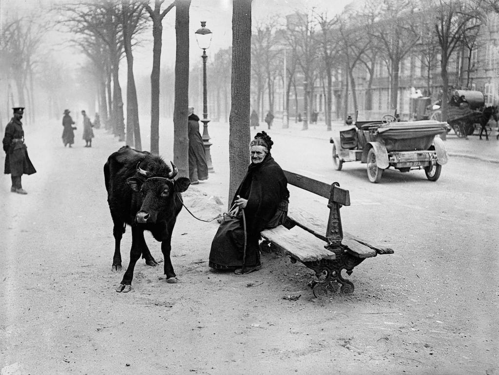 Vad är nödvändigt? Den här kvinnan fick fly till Paris från första världskriget men hon fick i alla fall med sig sin ko.