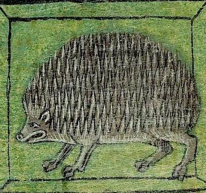 Blandad medeltida bild på igelkott.