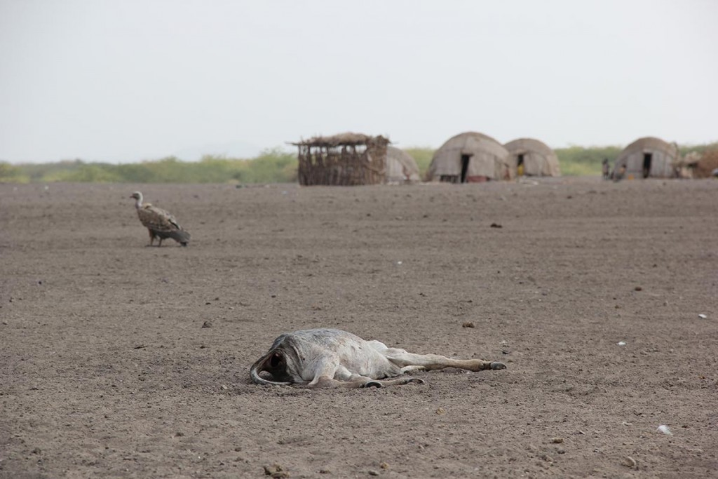 En by i närheten av Gewane i Afar, nordöstra Etiopien. På många ställen syns kadaver som dött av matbrist och uttorkning. Foto: AEimagebuilder