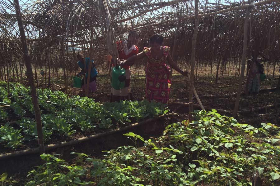 b)Två kvinnor i Mavivi med sin amarant, vilket är speciellt bra för människor på flykt eftersom det kan konsumeras inom tre veckor efter planteringen. Foto: Keith Mattingly